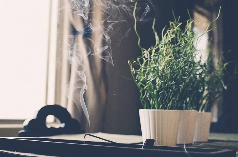 Meditación fácil. Incienso y planta